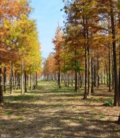 广州冬韵---湿地公园